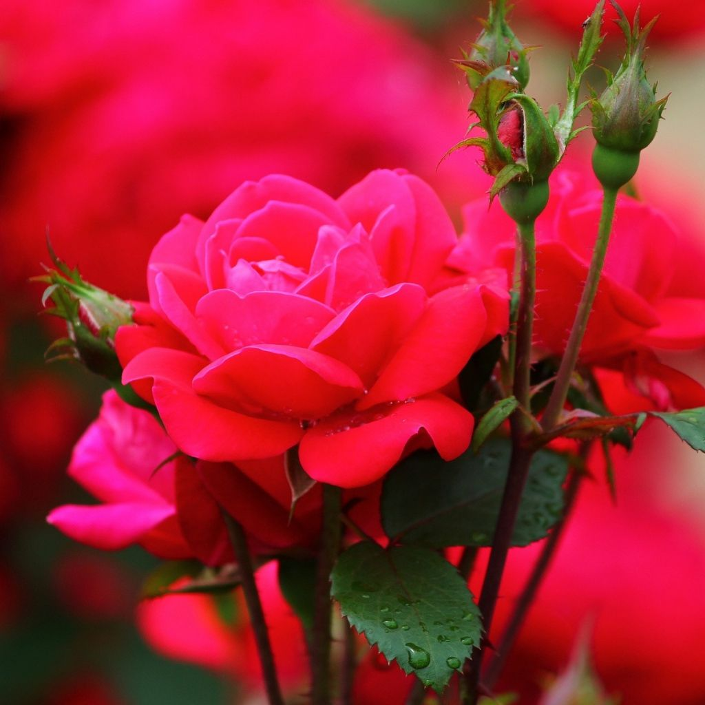 Pink Flowers Wallpaper For Phones Flowers Healthy