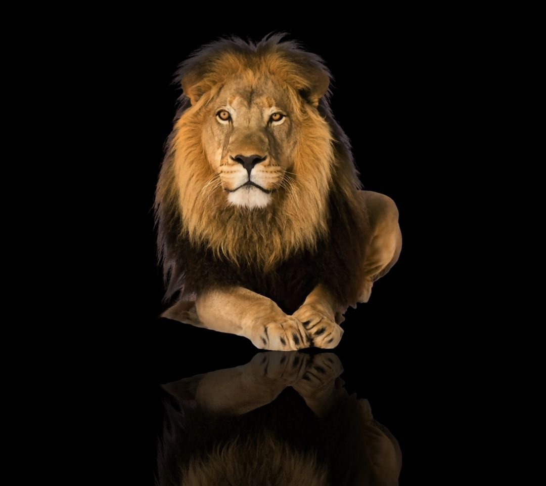 1080x960 mobile phone wallpapers download 52 1080x960 - Lion 4k wallpaper for mobile ...