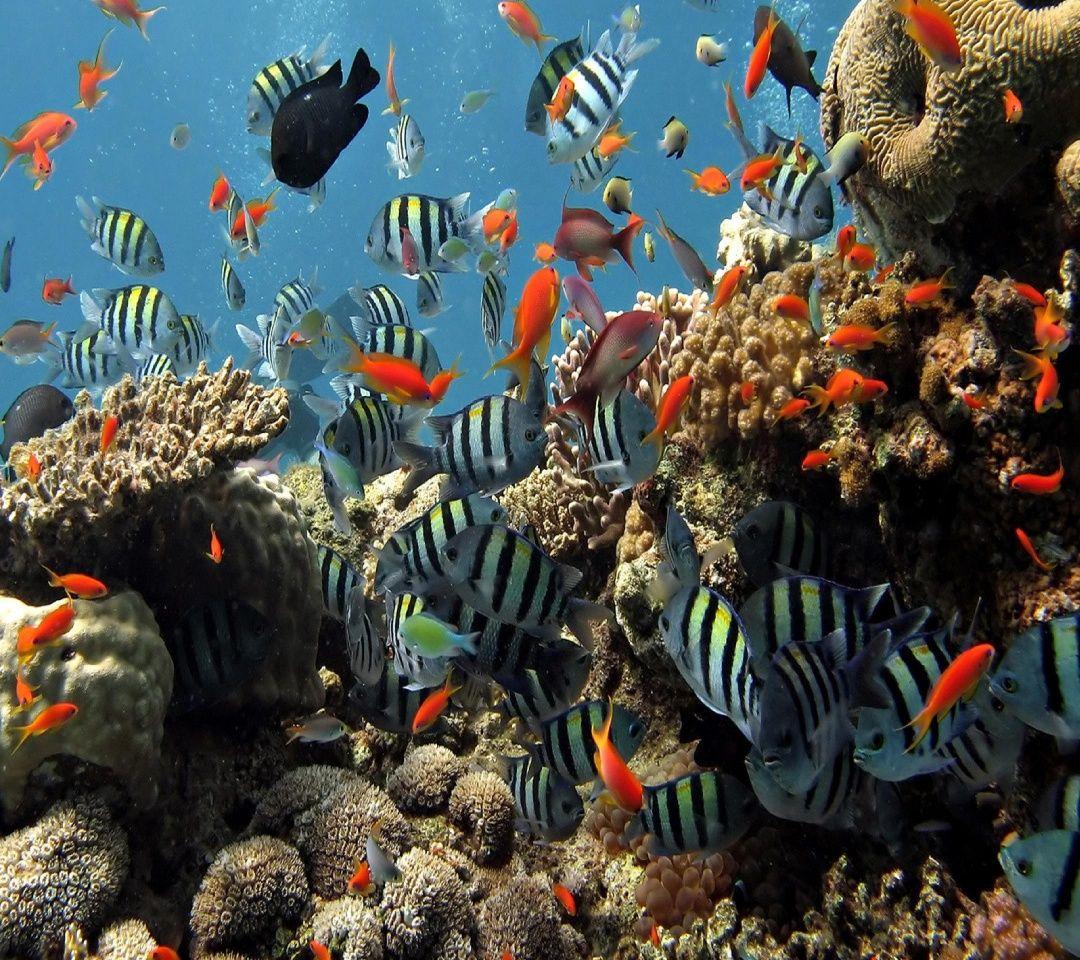 Pictures free underwater wallpapers underwater backgrounds underwater