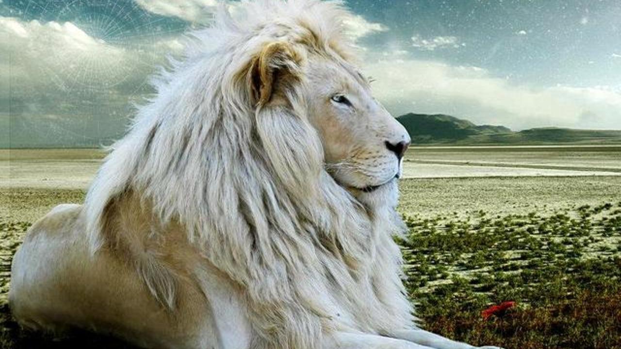 Best 25 Lion Hd Wallpaper Ideas On Pinterest: 1280x720 Mobile Phone Wallpapers Download