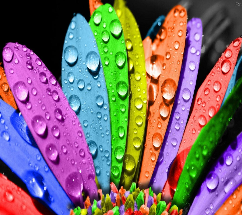 Wallpaper download in phone - Download Hd Wallpaper Live Colors 1440x1280 1280x1440 Free Hot