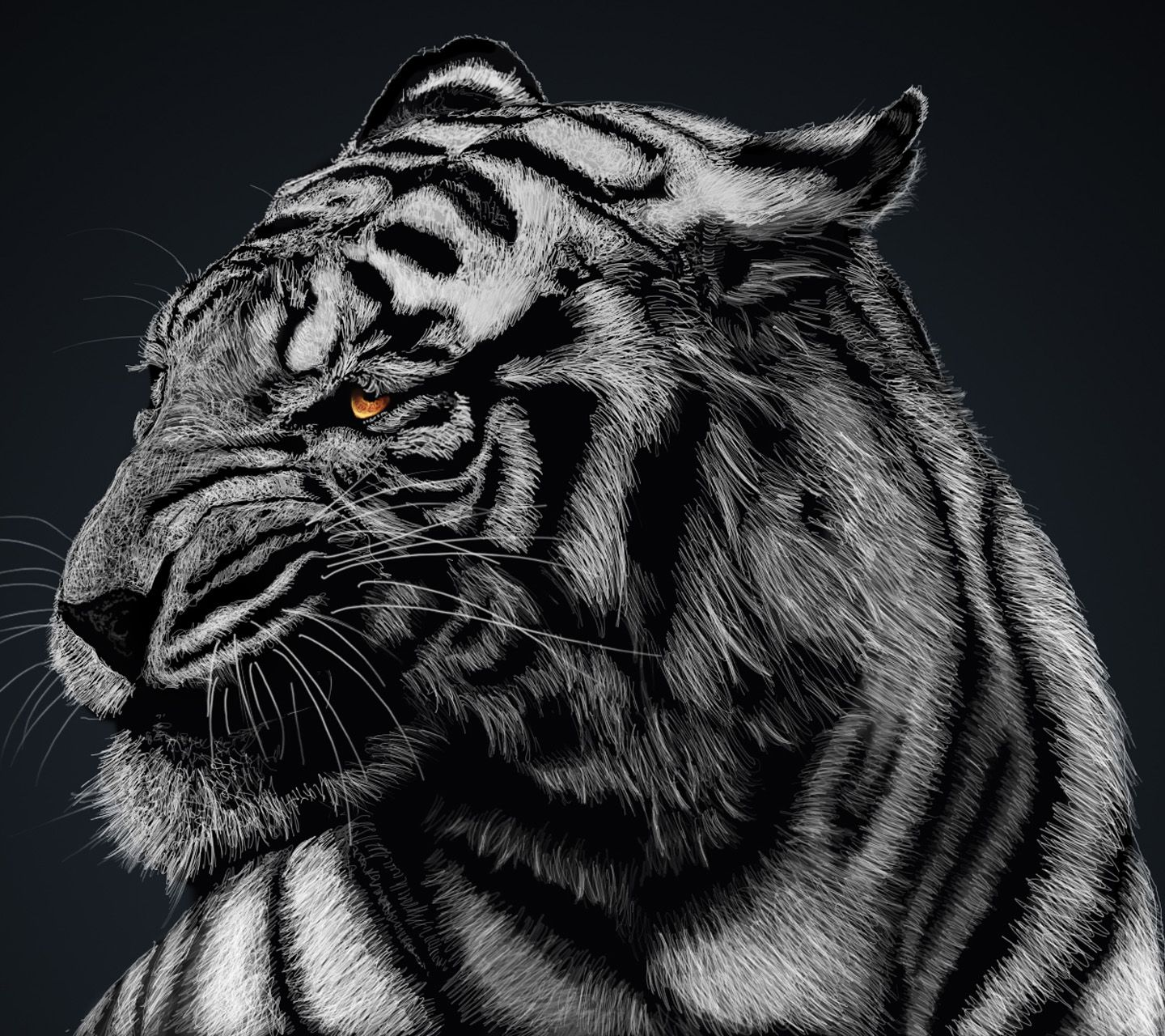 Tiger,1440x1280,1280x1440,free,hot,mobile phone wallpapers,www ...