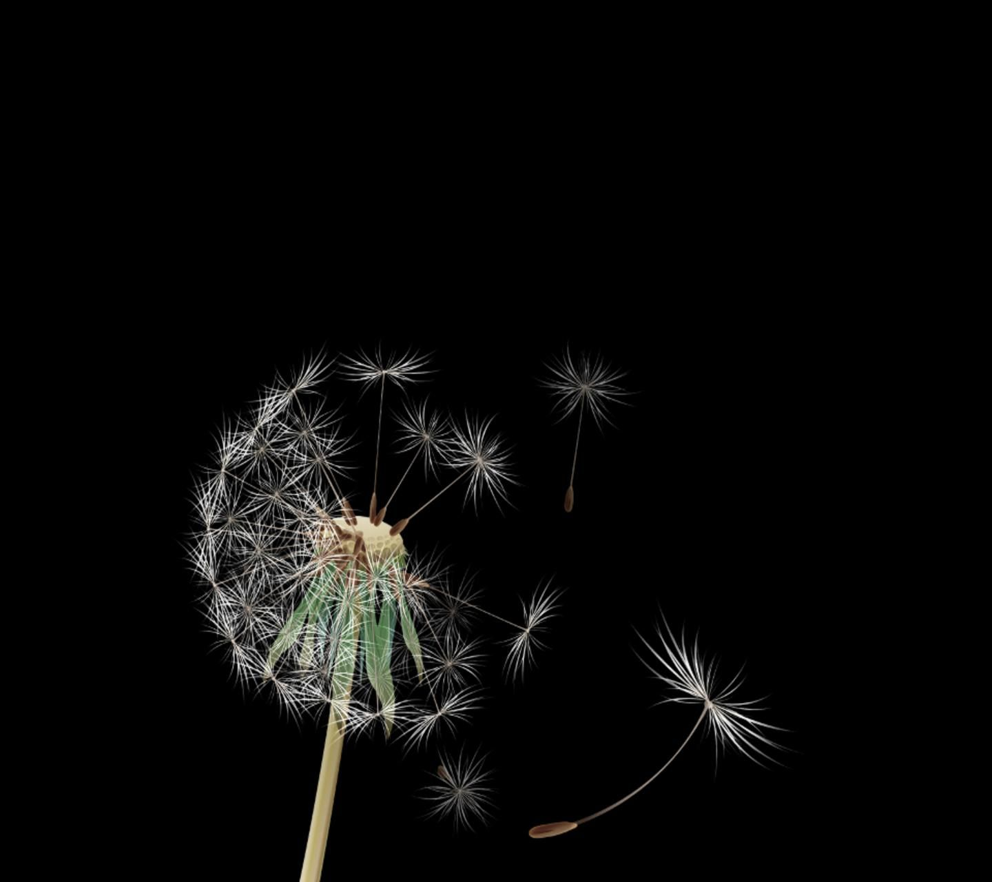 dandelion cell phone wallpaper quotes - photo #8
