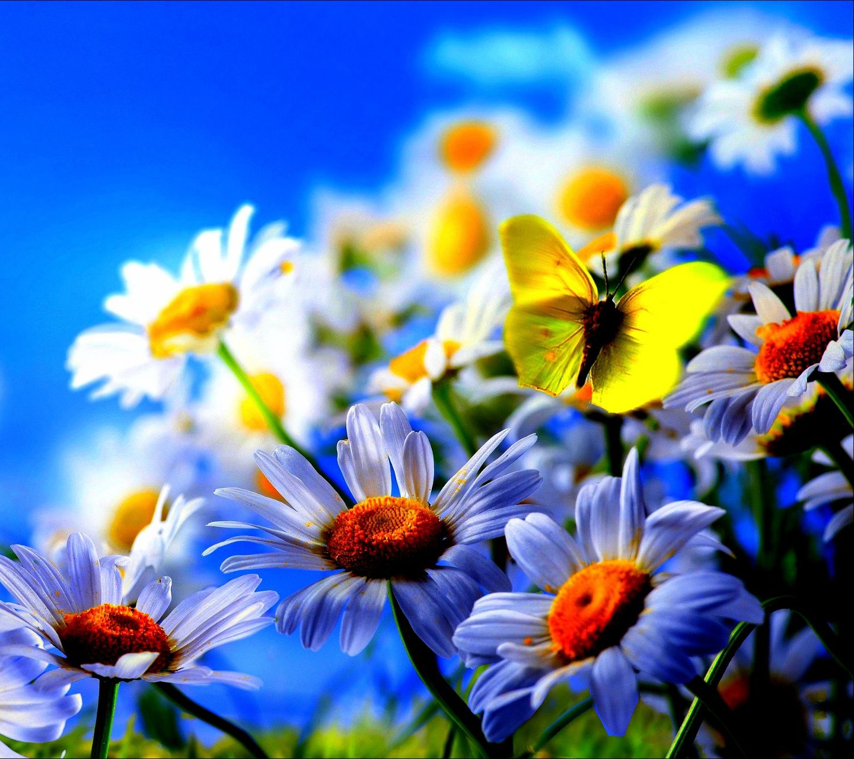 Wallpaper download in phone - Download Flowers 1440x1280 1280x1440 Free Hot Mobile Phone Wallpapers Www Download