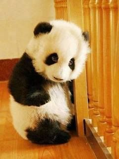 Download Cute Panda240x320320x240freehotmobile Phone Wallpapers