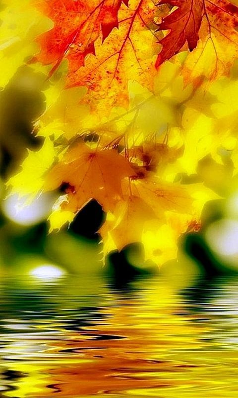 Картинки на мобильный осень