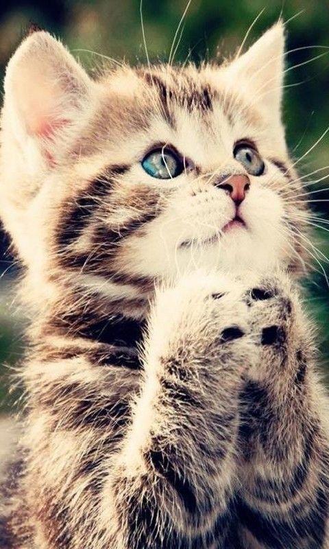 480x800 mobile phone wallpapers download 31 480x800 - Cute kitten wallpaper free download ...