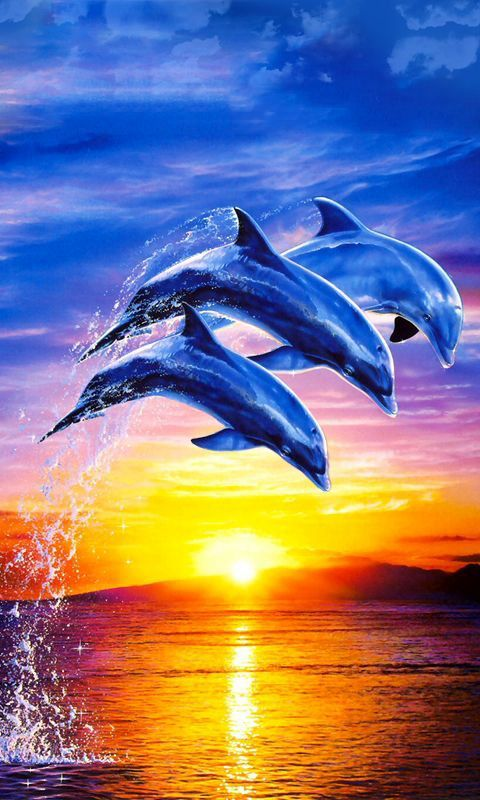 dolphin live wallpaper for android