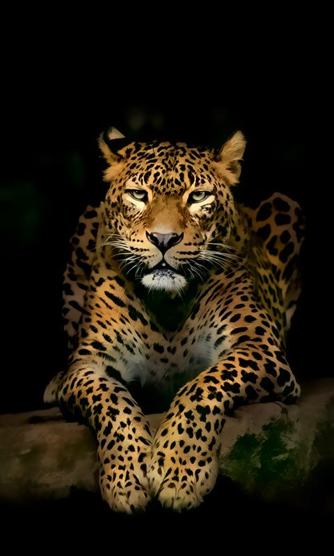 Download · leopard,480x800,800x480,free,hot,mobile phone wallpapers,www.