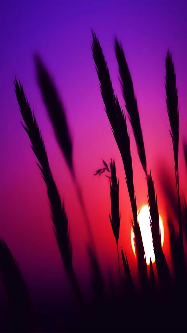 Download Pictures Sunset Wallpaper 360x640
