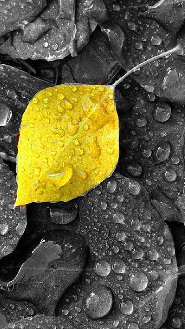 Download Yellow Leaf640x11361136x640freehotmobile Phone Wallpapers
