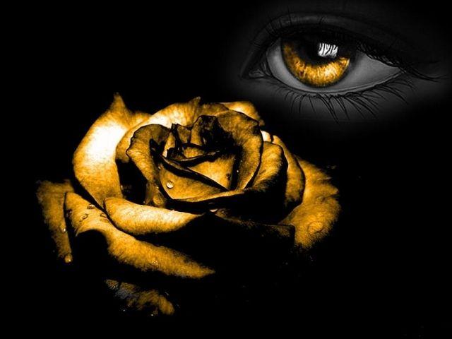 Обои На Телефон Золотая Роза