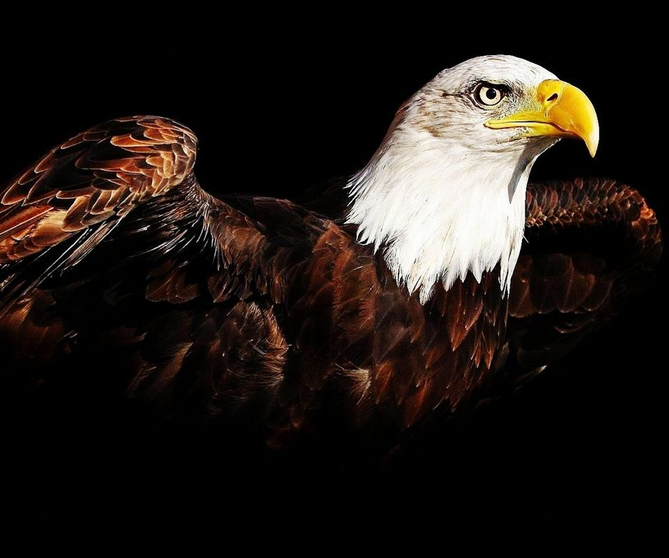 Eagle,960x800,800x960,free,hot,mobile phone wallpapers,www.wallpaper ...