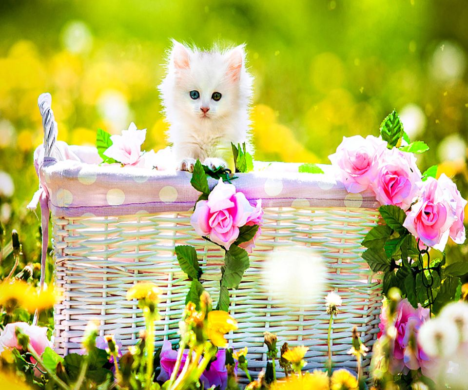 1024x640px Cute Wallpaper Download: 960x800 Mobile Phone Wallpapers Download